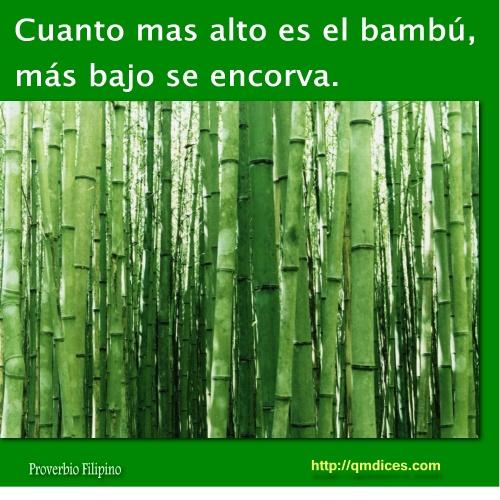 Cuanto mas alto es el bambú