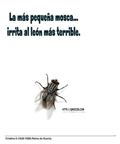 La más pequeña mosca...