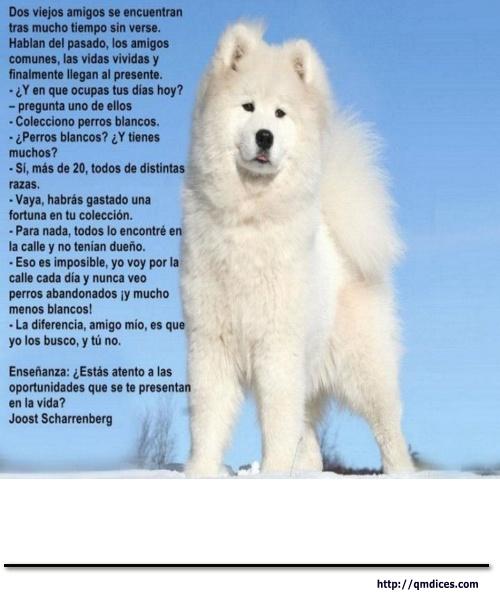 Los perros blancos