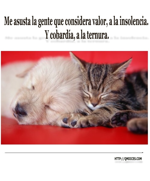 Me asusta la gente que considera valor, a la insolencia.