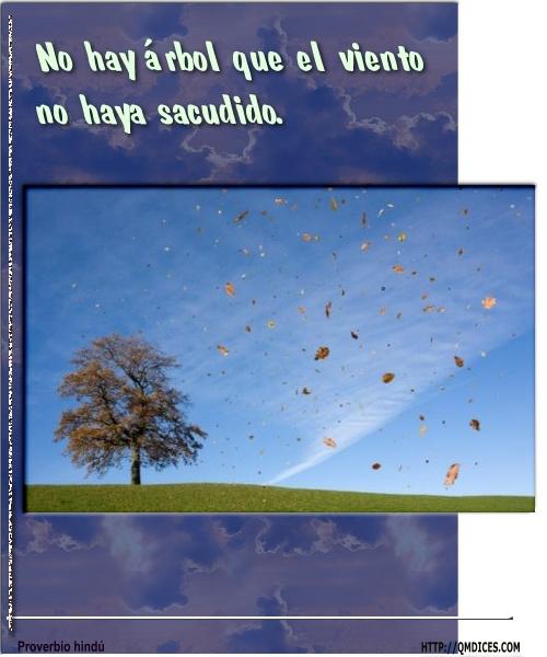No hay árbol que el viento