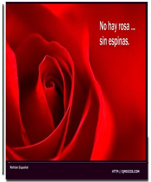No hay rosa ...