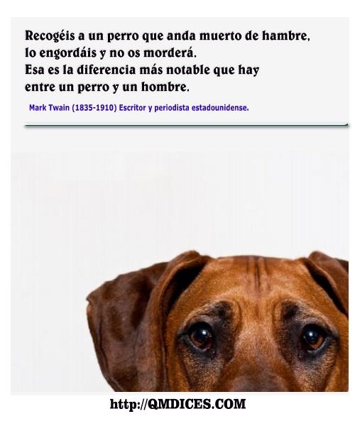 Recogéis a un perro que anda muerto de hambre