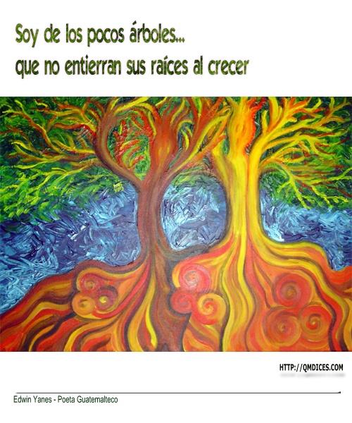 Soy De Los Pocos árboles Frases En Qmdices